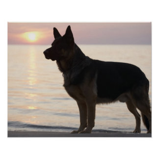 ジョージア湾、オンタリオのジャーマン・シェパード犬、 ポスター
