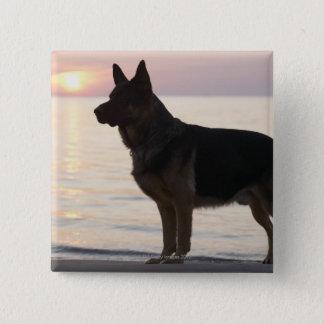 ジョージア湾、オンタリオのジャーマン・シェパード犬、 缶バッジ