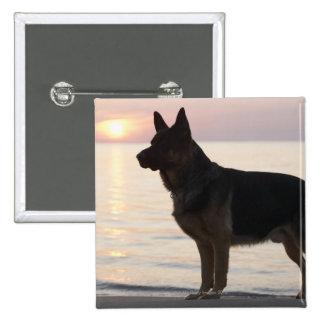 ジョージア湾、オンタリオのジャーマン・シェパード犬、 5.1CM 正方形バッジ