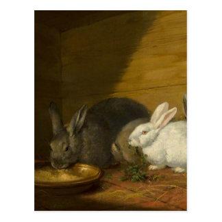 ジョージMorland著ウサギ ポストカード