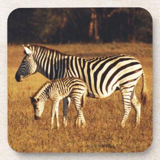 ジンバブエのHwangeの国立公園、Linkwasha コースター