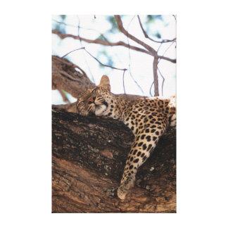 ジンバブエ、Manaは国立公園、ヒョウを分かち合います キャンバスプリント
