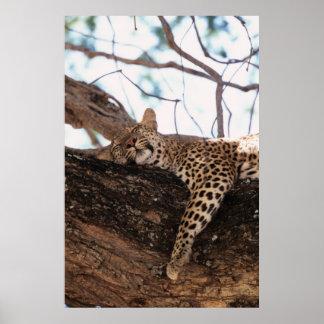 ジンバブエ、Manaは国立公園、ヒョウを分かち合います ポスター