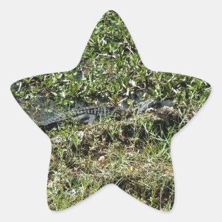 ジーンLafitteのルイジアナの泥地のわに 星シール