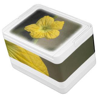 スイカの花 IGLOOクーラーボックス
