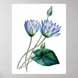 スイレンの植物の優れた質のプリント ポスター