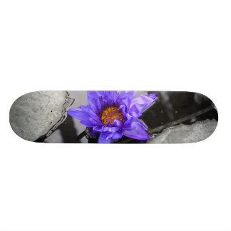 スイレン 20CM スケートボードデッキ