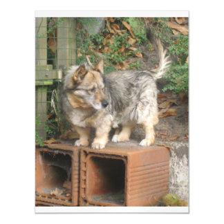 スウェーデンのvallhund full.png マグネットカード
