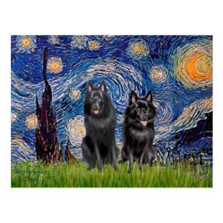 スキッパーキ(2)の-星明かりの夜 ポストカード