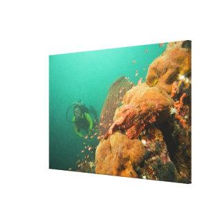 スキューバダイバー及びカサゴScorpanopsis キャンバスプリント