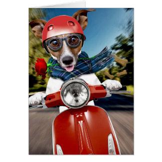 スクーター犬、ジャッキラッセル カード