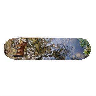 スケートボードを見ている馬 スケートボード