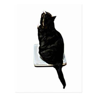 スケールの猫 ポストカード