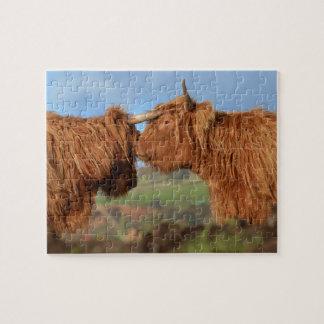 スコットランドの高地の牛 ジグソーパズル