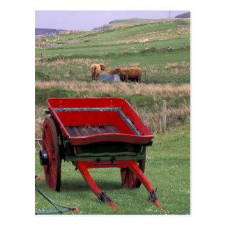 スコットランドのSkye、Kilmuirの島。 家畜 ポストカード