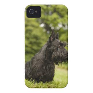 スコットランドテリア Case-Mate iPhone 4 ケース