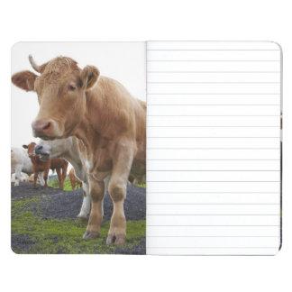 スコットランド分野の若く白い牛の群 ポケットジャーナル