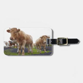 スコットランド分野の若く白い牛の群 ラゲッジタグ