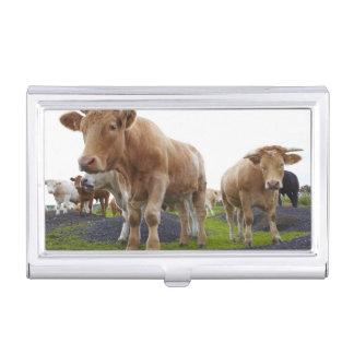 スコットランド分野の若く白い牛の群 名刺入れ