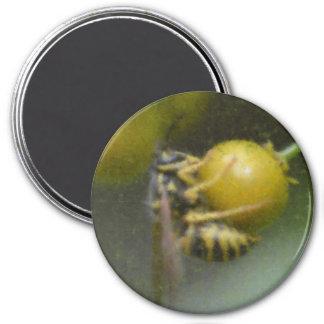 スズメバチおよび果実 マグネット