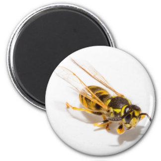 スズメバチ マグネット