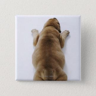 スタジオで横になっているグレートデーンの子犬頭上に 5.1CM 正方形バッジ