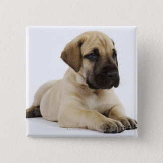 スタジオにあっているグレートデーンの子犬 5.1CM 正方形バッジ