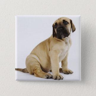 スタジオに坐っているグレートデーンの子犬 5.1CM 正方形バッジ