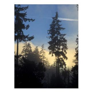 スタンレーパーク、森、海洋の層の霧の圧延 ポストカード