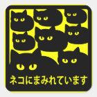 ステッカー 「ネコにまみれています」イエロー スクエアシール