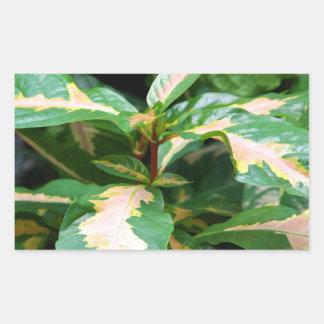 ステッカー- Tricoloredの風刺漫画植物 長方形シール