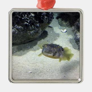 ストライプのなBurrfish メタルオーナメント