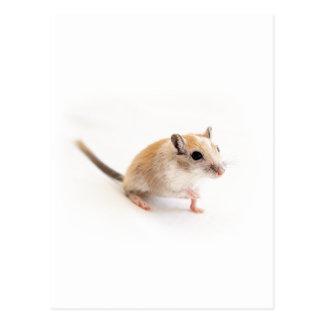 スナネズミのかわいいベビー動物ペットスナネズミのテンプレート ポストカード