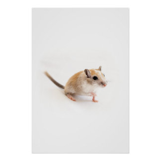 スナネズミのかわいい赤ん坊動物ペットスナネズミのテンプレート ポスター