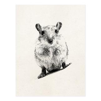スナネズミのベビーの動物のイラストレーションペットスナネズミ ポストカード