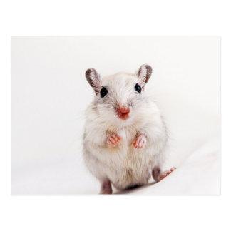 スナネズミのベビー動物のかわいいペットスナネズミのテンプレート ポストカード