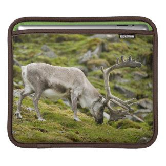 スバールバルのトナカイ2 iPadスリーブ