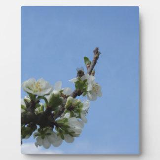 スモモの木の蜂のimpollinatesの花 フォトプラーク
