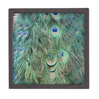 スワッグの緑および青の孔雀の羽 ギフトボックス