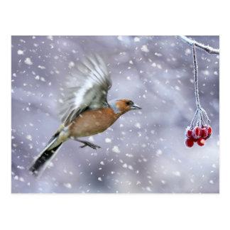 ズアオアトリのクリスマスの郵便はがき、冬の郵便はがき ポストカード
