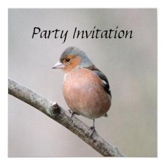 ズアオアトリのパーティの招待状 カード