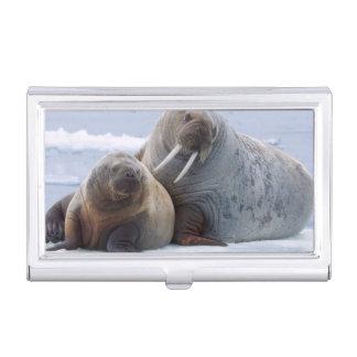 セイウチの牛および子牛は海氷の浮氷で休みます 名刺入れ