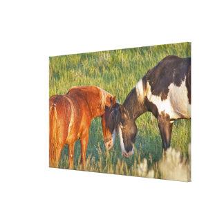 セオドア・ルーズベルトの国民の野生の馬 キャンバスプリント