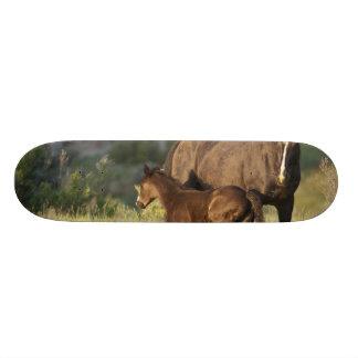 セオドア・ルーズベルトの国立公園の野生の馬 18.1CM オールドスクールスケートボードデッキ