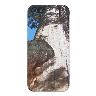 セコイアオスギ iPhone 5 COVER
