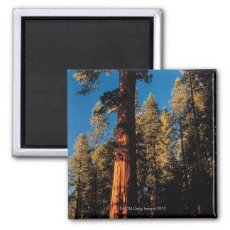 セコイア国立公園、カリフォルニア2 マグネット