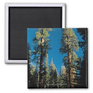 セコイア国立公園、カリフォルニア マグネット