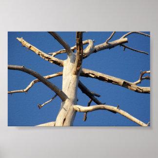 セコイア国立公園 ポスター