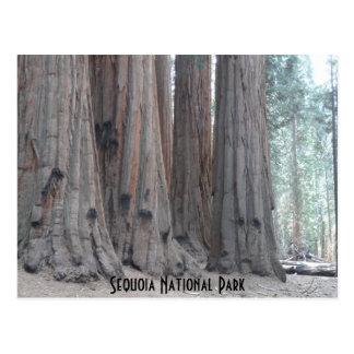 セコイア国立公園 ポストカード