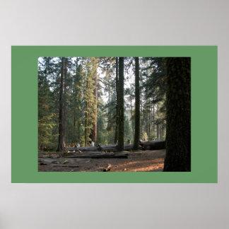 セコイア森林 ポスター